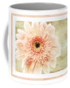Gerber Daisy 1 Coffee Mug