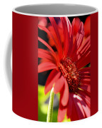 Gerber Daisy Shadows Coffee Mug
