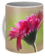 Gerbera Daisy Named Raspberry Picobello Coffee Mug