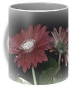 Gerbera Dream 3 Coffee Mug
