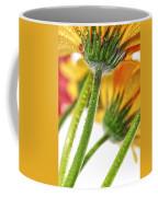 Gerbera Flowers Coffee Mug