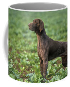 German Short-haired Pointer Coffee Mug