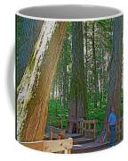 Giant Cedar Grove On Giant Cedars Trail In Mount Revelstoke Np-bc Coffee Mug