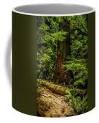Giant Douglas Fir Trees Collection 3 Coffee Mug