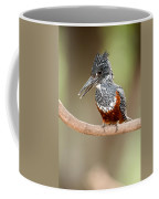 Giant Kingfisher Megaceryle Maxima Coffee Mug