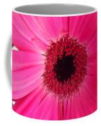 Flower Photography - Giant Pink Gerbera Daisy Coffee Mug