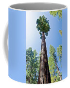 Giant Sequoia In Mariposa Grove In Yosemite National Park-california  Coffee Mug