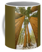 Giant Sequoias And First Snow Coffee Mug