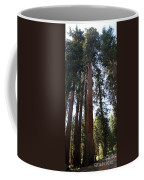 Giant Sequoias - Yosemite Park Coffee Mug