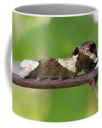 Giant Swallowtail Caterpillar Coffee Mug
