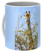 Giraffe Giraffa Camelopardalis Peeping From Acacia Coffee Mug