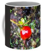 Glistening Wet Rose Hip Coffee Mug