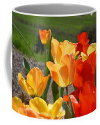 Glowing Sunlit Tulips Art Prints Red Yellow Orange Coffee Mug