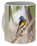 Golden-breasted Starling Coffee Mug
