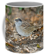 Golden-crowned Sparrow Coffee Mug