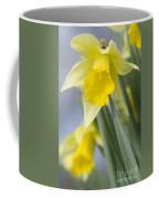 Golden Daffodils Coffee Mug