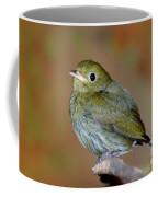 Golden-headed Manakin Coffee Mug
