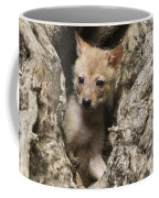Golden Jackal Canis Aureus Cubs 2 Coffee Mug