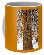 Golden Leaves In Mt Vernon Coffee Mug