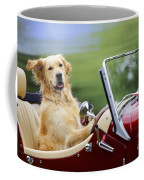 Golden Retriever In Car Coffee Mug
