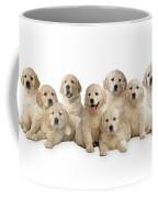Golden Retriever Puppies, In A Line Coffee Mug