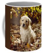 Golden Retriever Puppy Dog In Fallen Coffee Mug
