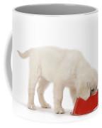 Golden Retriever Puppy Eating Coffee Mug