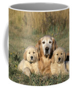 Golden Retriever With Puppies Coffee Mug