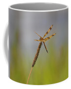Golden Tailed Dragonfly Coffee Mug