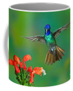 Golden-tailed Sapphire At Flower Coffee Mug