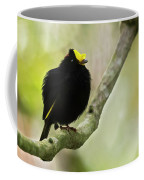 Golden-winged Manakin Coffee Mug