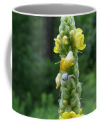 Goldenrod Crab Spider In Yellow Coffee Mug