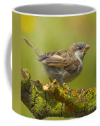 Gorrion House Sparrow Coffee Mug