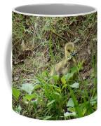 Gosling Chewing On Some Grass Coffee Mug