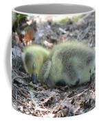 Gosling Napping  Coffee Mug