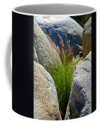 Grasses In Oasis On Borrego Palm Canyon Trail In Anza-borrego Desert Sp-ca Coffee Mug