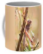 Grasshopper In The Marsh Coffee Mug