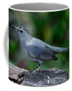 Gray Catbird Dumetella Carolinensis Coffee Mug