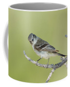 Gray Flycatcher Coffee Mug