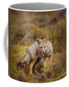 Zorro Coffee Mug