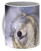 Gray Wolf Canis Lupus Shaking Snow Off Coffee Mug