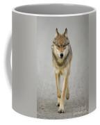 Gray Wolf Denali National Park Alaska Coffee Mug