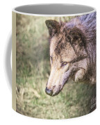 Gray Wolf Grey Wolf Canis Lupus Coffee Mug