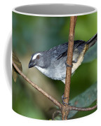 Grayish Saltator Coffee Mug