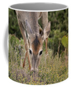 Grazing Oklahoma Coffee Mug