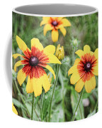 Great Blanket Flower Gaillardia Coffee Mug
