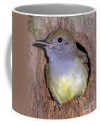Great Crested Flycatcher In Nest Cavity Coffee Mug