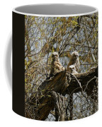 Great Horned Owlets Photo Coffee Mug