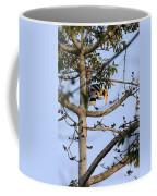 Great Indian Hornbill Coffee Mug