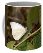 Great Southern White Butterfly Coffee Mug by Rudy Umans